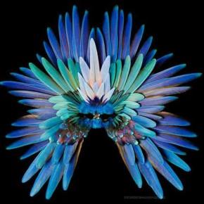 Feather Fantasies x Lorra Lee Rose