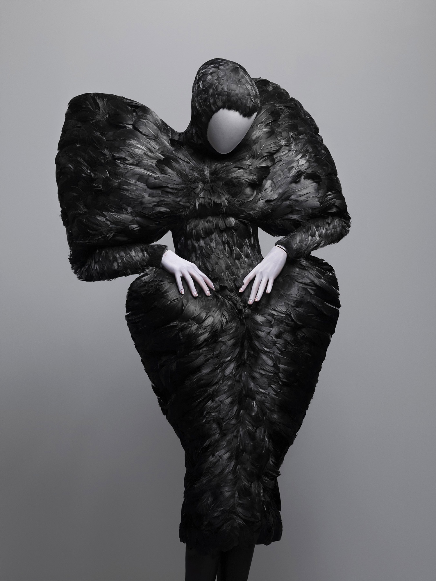 The Horn of Plenty, autumn/winter 2009–10 Black duck feathers